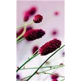 Vliesové fototapety kvetiny fialové rozmer 150 cm x 250 cm