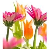 Vliesové fototapety jarné kvety rozmer 225 cm x 250 cm