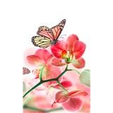 Vliesové fototapety orchidea s motýlmi rozmer 150 cm x 250 cm