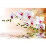 Vliesové fototapety biela orchidea rozmer 375 cm x 250 cm