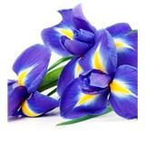 Vliesové fototapety iris rozmer 225 cm x 250 cm