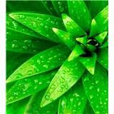 Vliesové fototapety orosené listy rozmer 225 cm x 250 cm