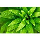 Vliesové fototapety orosené listy rozmer 375 cm x 250 cm