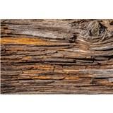 Vliesové fototapety kôra stromov rozmer 375 cm x 250 cm