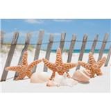 Vliesové fototapety morská hviezdica rozmer 375 cm x 250 cm