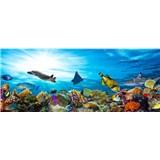 Vliesové fototapety morské ryby rozmer 375 cm x 150 cm