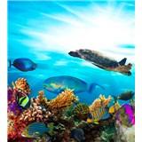 Vliesové fototapety morské ryby rozmer 225 cm x 250 cm