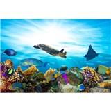 Vliesové fototapety morské ryby rozmer 375 cm x 250 cm