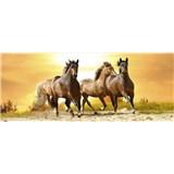 Vliesové fototapety kone pri západe slnka rozmer 375 cm x 150 cm