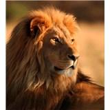 Vliesové fototapety lev rozmer 225 cm x 250 cm