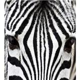 Vliesové fototapety zebra rozmer 225 cm x 250 cm