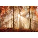 Vliesové fototapety les na jeseň, rozmer 104 cm x 70,5 cm