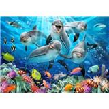 Vliesové fototapety selfie delfíny rozmer 368 cm x 254 cm