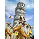 Vliesové fototapety surikaty a Šikmá veža v Pise rozmer 184 cm x 254 cm