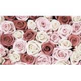 Fototapety ruže, rozmer 368 cm x 254 cm