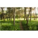 Vliesové fototapety Hefele kvetinová magia lesa, rozmer 450 cm x 280 cm