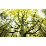 Vliesové fototapety Hefele strom snov II, rozmer 450 cm x 280 cm