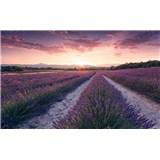 Vliesové fototapety Hefele levanduľový sen, rozmer 450 cm x 280 cm