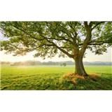 Vliesové fototapety Hefele magický strom, rozmer 450 cm x 280 cm