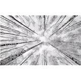 Vliesové fototapety Hefele kmene briez, rozmer 450 cm x 280 cm