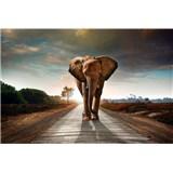 Vliesové fototapety slon rozmer 375 cm x 250 cm