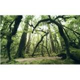 Vliesové fototapety Hefele staroveké kmene stromov, rozmer 450 cm x 280 cm