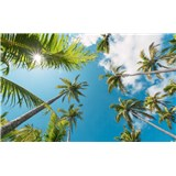Vliesové fototapety Hefele kokosové nebo, rozmer 450 cm x 280 cm