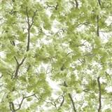 Vliesové tapety na stenu Home rozkvitnuté stromy zelené