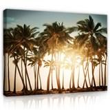 Obraz na stenu palmy pri západe slnka 70 x 50 cm