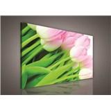 Obraz na stenu ružové tulipány 75 x 100 cm