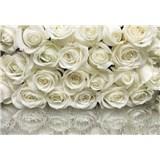 Fototapety růže bílé, rozmer 368 x 254 cm