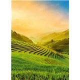Fototapety terasovité rýžové polia vo Vietname rozmer 184 x 254 cm
