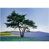 Vliesové fototapety strom v poli v Japonsku rozmer 368 x 254 cm