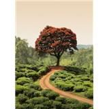 Vliesové fototapety červený strom na Srí Lanke rozmer 184 x 254 cm