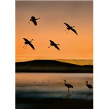 Vliesové fototapety vtáky pri západe slnka rozmer 184 x 254 cm