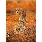 Vliesové fototapety leopard rozmer 184 x 254 cm