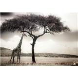 Vliesové fototapety žirafa rozmer 368 x 254 cm