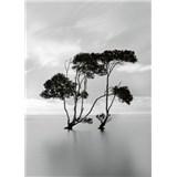 Vliesové fototapety stromy v stojatej vode rozmer 184 x 254 cm