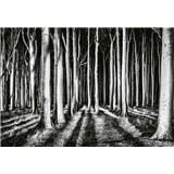 Vliesové fototapety tajomný les rozmer 368 x 254 cm