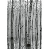 Fototapety březový les vo vode rozmer 184 x 254 cm
