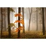 Fototapety jesenný les v hmle rozmer 368 x 254 cm