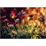 Vliesové fototapety kvetiny a svetlo rozmer 368 x 254 cm