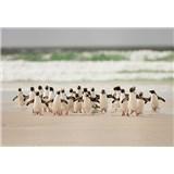 Fototapety tučniaky rozmer 368 x 254 cm