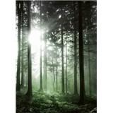 Fototapety slnečné lúče v lese rozmer 184 x 254 cm