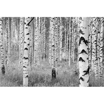Vliesové fototapety brezy, rozmer 368 x 248 cm
