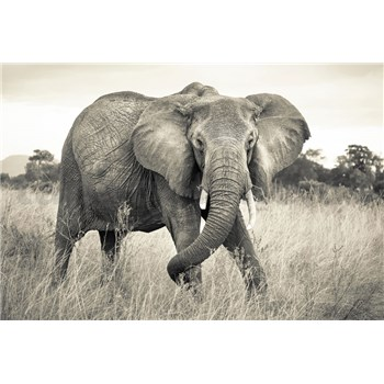 Vliesové fototapety slon, rozmer 368 x 248 cm