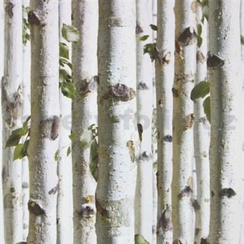 Vliesové tapety Bluff kmene brezy