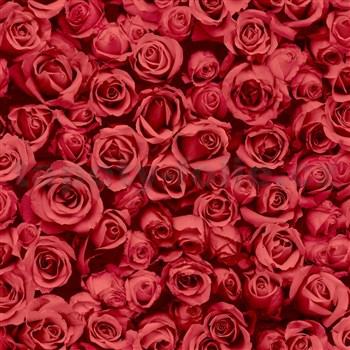 Vliesové tapety na stenu IMPOL Escapade ruže červené