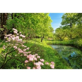 Fototapety Park in the Spring, rozmer 366 x 254 cm - POSLEDNÉ KUSY