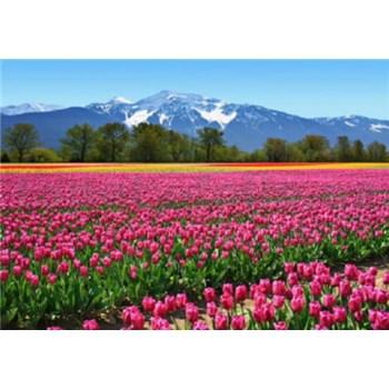 Fototapety Tulipány, rozmer 366 x 254 cm
